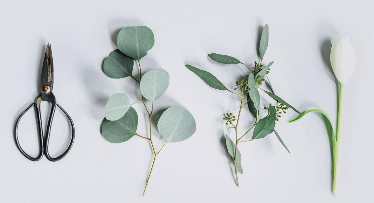 florist 03 de magdalena sala en pontevedra